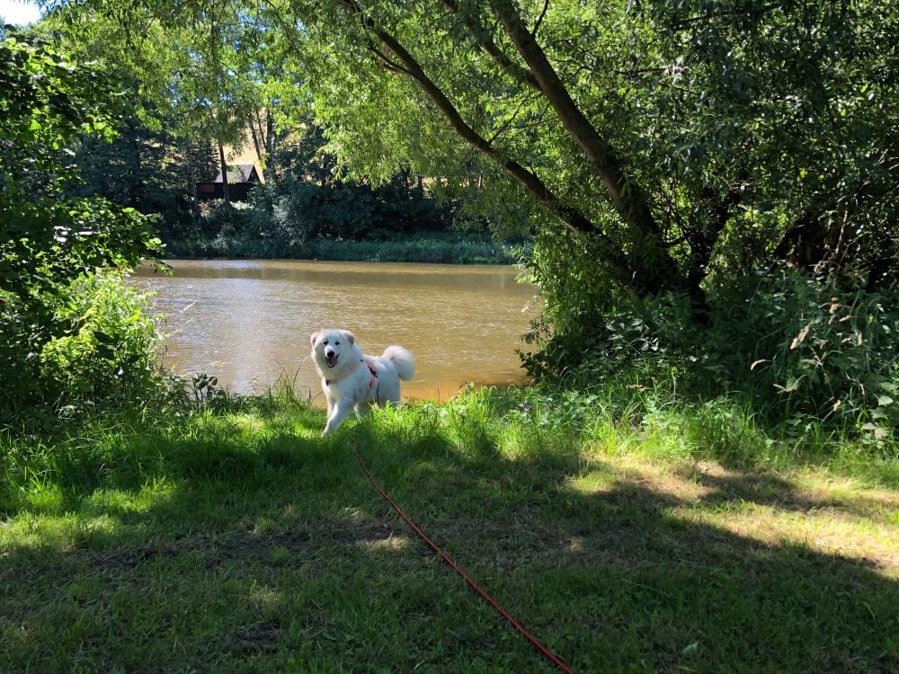 Auf der anderen Seite vom großen Fluß