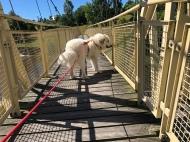Die Bella auf der Tschooo-Pauuu-Wackelbrücke