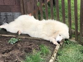 … und müde. Jawoll!