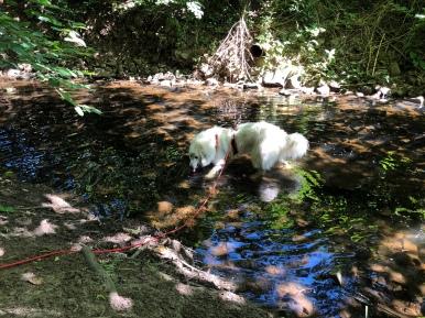 Wasser im Gottesaubach schlabbern