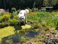 Bella am Gartenteich