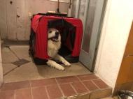 Bella in ihrem roten Ferienhaus