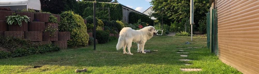 Die schlanke Bella in ihrem Garten