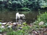 Baden im großen Fluß