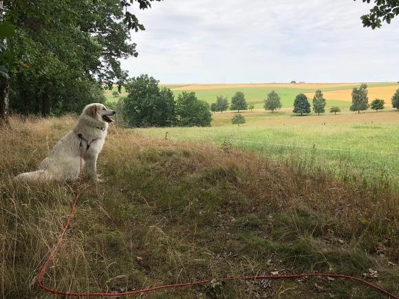 Bella beobachtet Rehe – wer sie entdeckt hat gute Augen