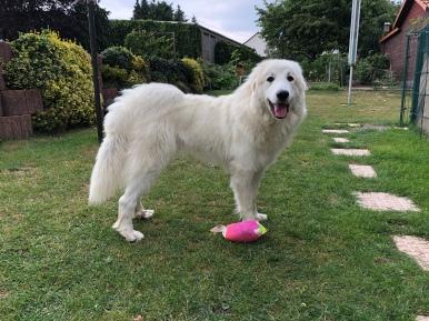 Die Bella mit ihrem bunten Ball