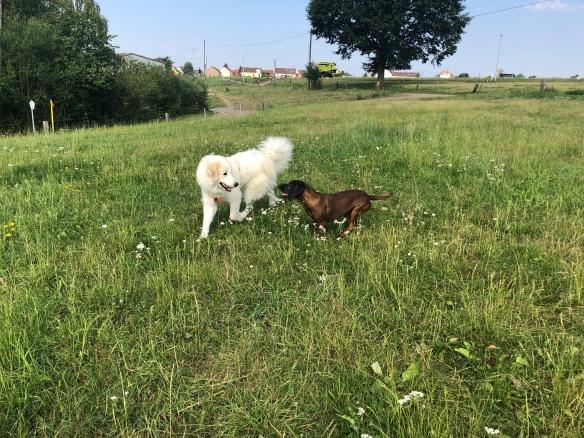 Die Bella und die Cora auf der großen Feldwiese