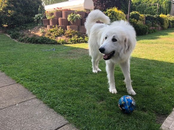Mit meinem Ball in meinem Garten