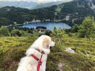 Bella auf der Panoramaalm (2.000 m) mit Blick auf den Turracher See (1.763 m)