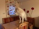 Man steigt nicht auf den Tisch!