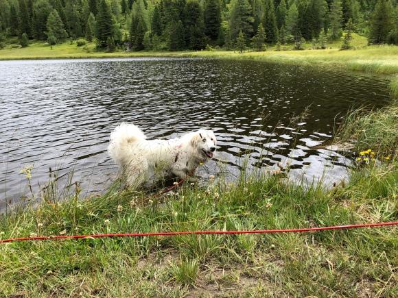 Baden im Schwarzsee