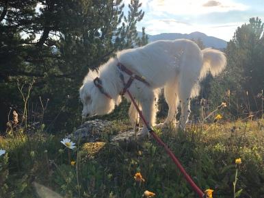 Die Bella in der Morgenbergsonne