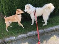 Bella trift einen Hund