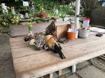 Hühnerns im Eselnspark