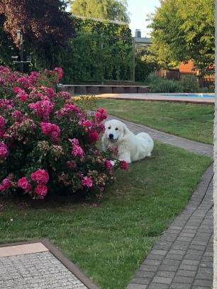 Hinter den Rosen versteckt