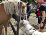 Pferdekussi 🐶😘🐶
