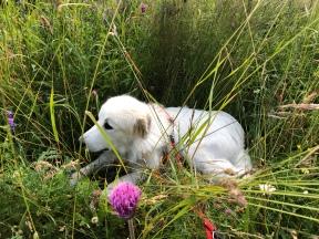 Bella kann auch ein kleines weißes Reh sein