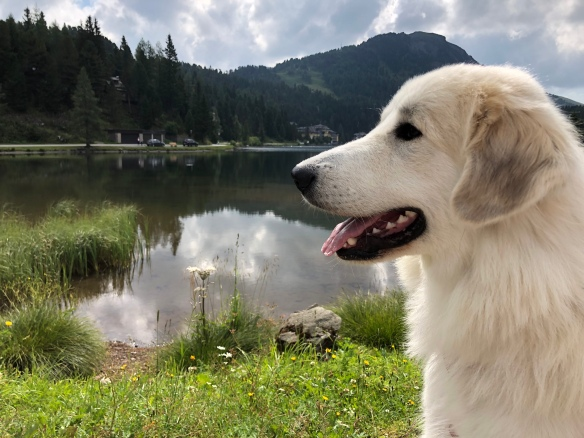 Eine Bella am Turracher See
