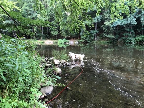 Bella in der Tschooo-Pauuu (Zschopau)