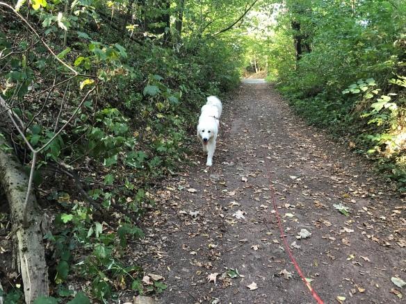 Die Bella geht spazieren