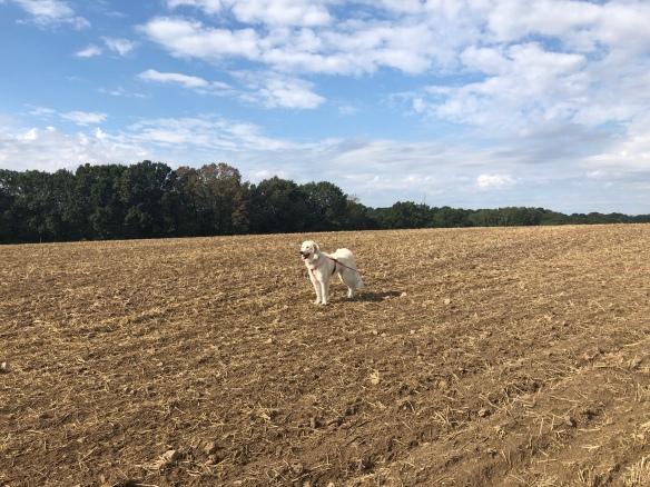Die Bella auf dem großen, weiten Feld