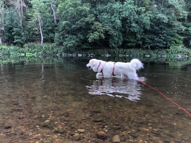 Die Bella geht dann mal baden