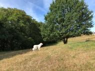 Pyriprinzessin Bella auf der großen Wiese am Feld