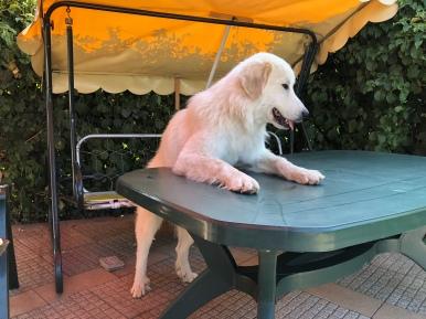 Mein Tisch …