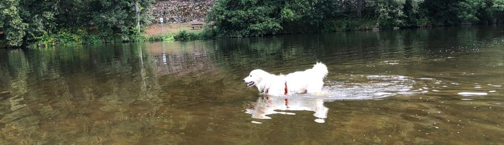 Die Bella im großen Fluß mit dem komischen Name