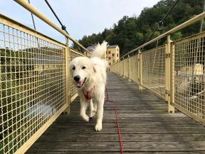 Die Bella auf der Wackelbrücke …
