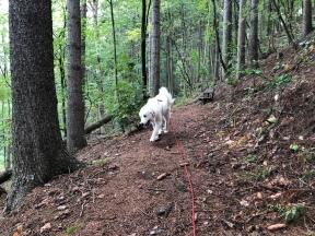 … und auf dem Weg durch den Wald