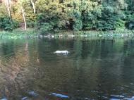 Die Bella kann schwimmen