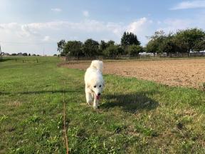 Die Bella geht spazieren –