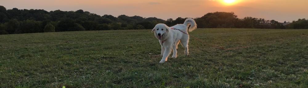 Die Bela mag den Sonnenuntergang