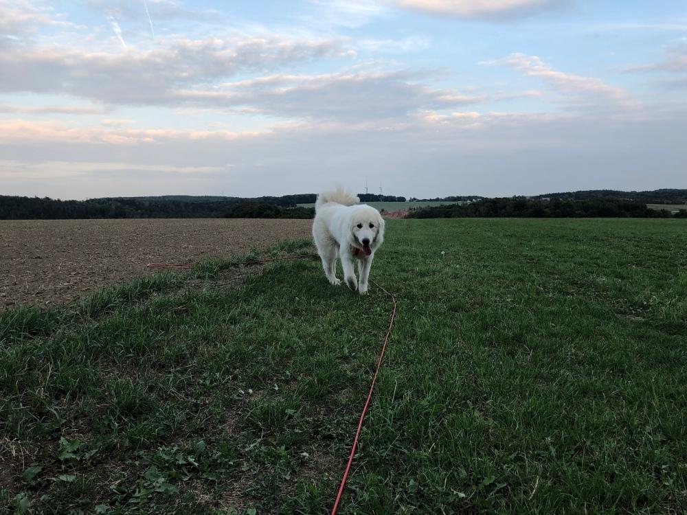 Beim Abendspaziergang auf meiner großen Feldwiese