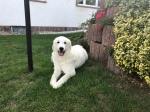 Die Bella lacht in ihrem Garten