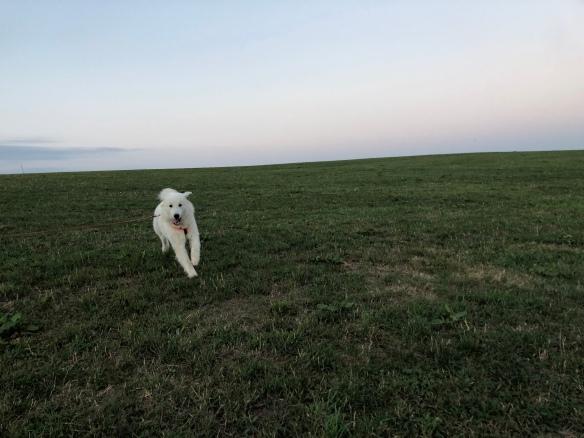 Achtung! Hier kommt eine Bella!