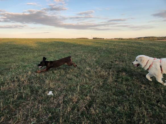 Mit Cora auf der großen Feldwiese