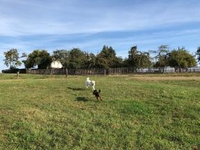 … toben über die große Feldwiese