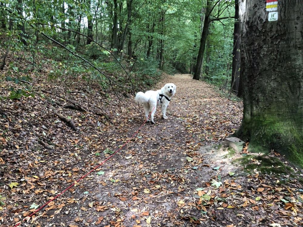 Auf dem Heimweg durch den Wald