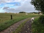 Die Bella bei den Rindviehchern …