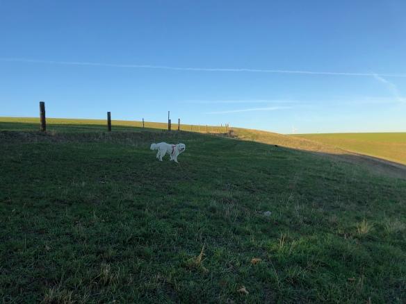 Abendspaziergang auf meiner großen Feldwiese