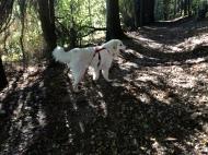Die Bella im Herbstwald