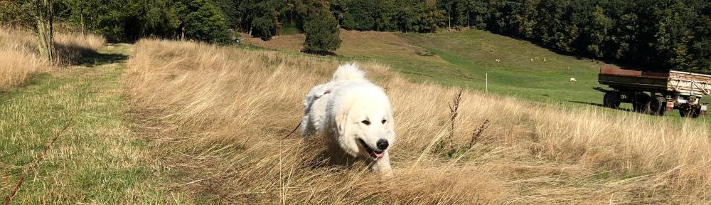 Durc das hohe Gras