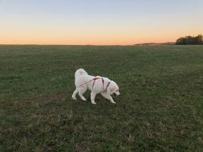 Abendsauf der großen Feldwiese