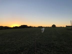Abendspaziergang mit Sonnenuntergang