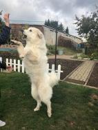 Sooo groß ist die Bella …