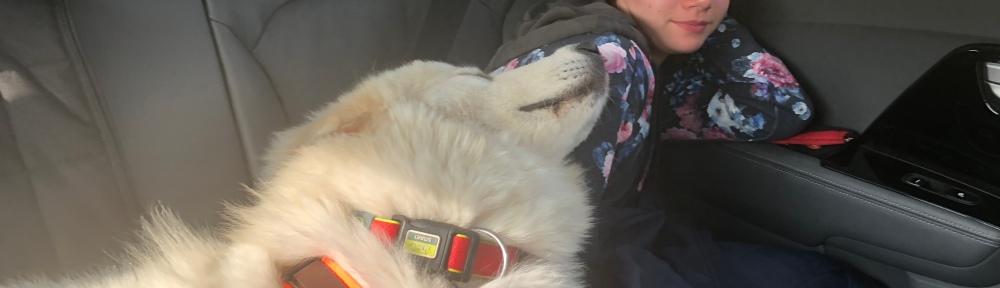Die Bella und die kleine Menschenschwester schlummern im Auto