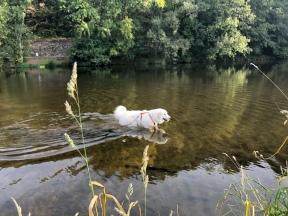 Die Bella geht im großen Fluß baden, …