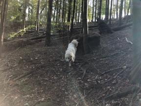 … durch den Wald …